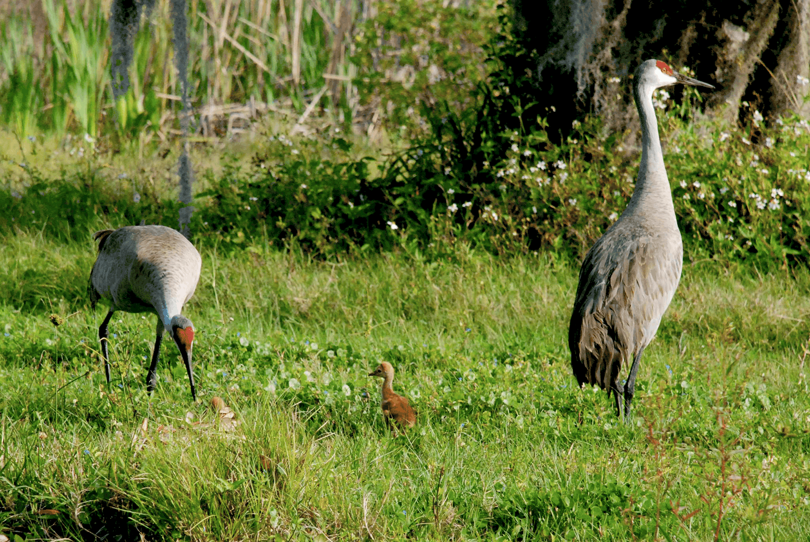farmraces_cherrylake2